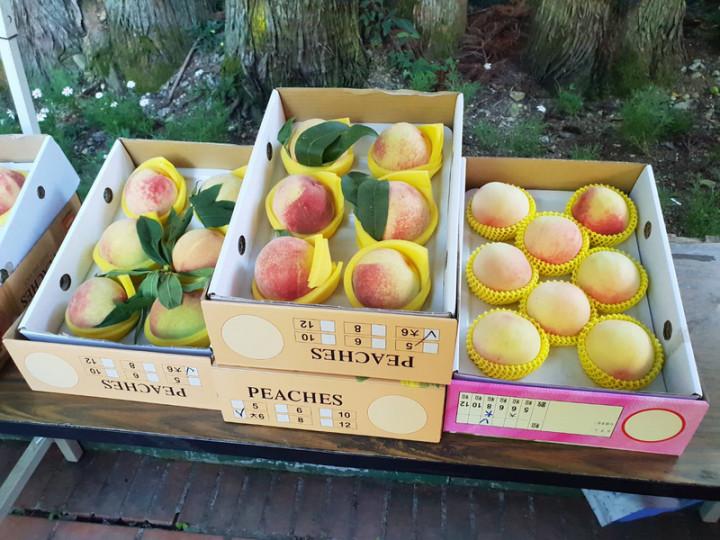 過去武陵農場生產的水蜜桃只供應到現場旅遊的遊客採購,因應疫情休園,武陵農場低調推出水蜜桃團購活動,沒想到意外搶手,短短10天已接獲約1500盒水蜜桃訂單。(武陵農場提供)