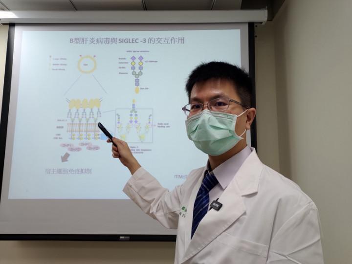 中國醫藥大學附設醫院醫師蔡宗佑23日表示,研究團隊發現B型肝炎病毒的表面抗原(HBsAg)存在著唾液酸聚醣(sialoglycans),會與人體免疫細胞上的免疫檢查點Siglec-3結合,從而抑制人體免疫系統對抗病毒。(中國醫藥大學附設醫院提供)