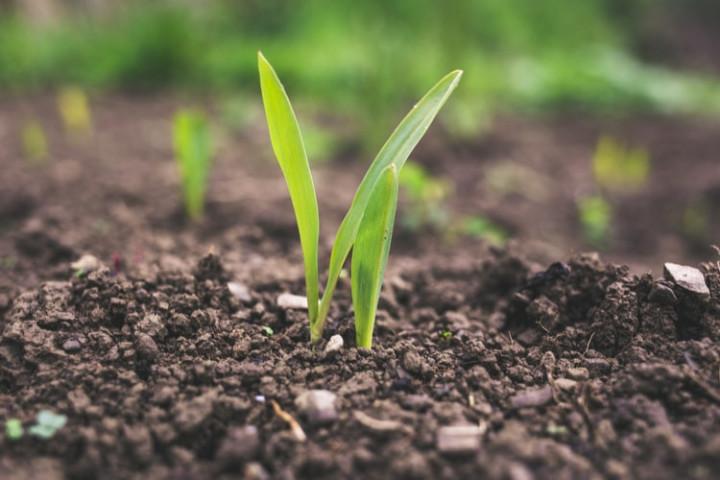 精進農產品生產與驗證體系 完備法規配套