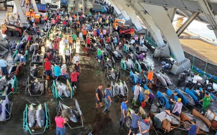 屏東黑鮪魚文化觀光季今年受疫情影響停辦,但黑鮪魚卻大豐收,至12日止捕獲黑鮪魚突破4000隻,達4097隻,數量破13年的紀錄,不過價格卻比往年同期滑落1/3。