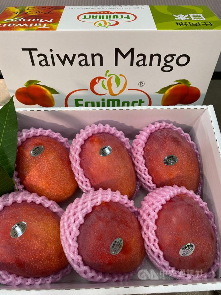 台南芒果即將進入盛產期,今年受到乾旱少雨影響,「小果」比例比往年多,不過果農也指出,今年芒果口感品質優於往年
