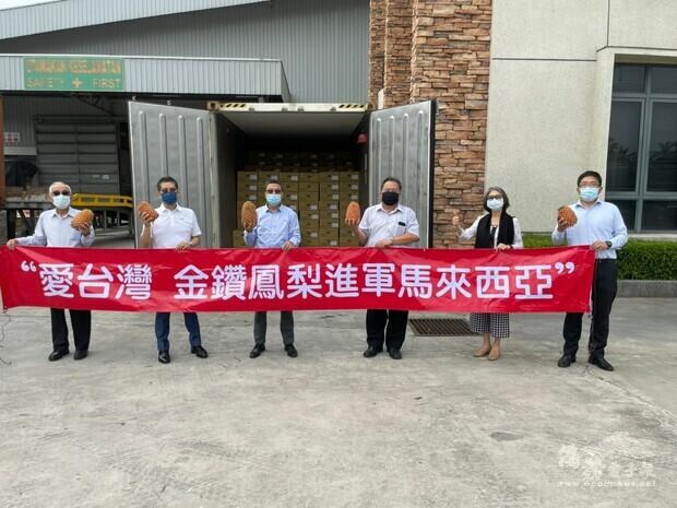 吉隆坡臺灣商會魏早增會長在其工廠進行臺灣金鑽鳳梨開櫃儀式