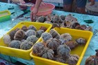 Sea urchins hit Penghu market Wednesday. / Photo courtesy of CNA